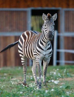 Im Wildpark Schwarzach leben über 400 einheimische und exotische Tiere in artgerechten Gehegen.