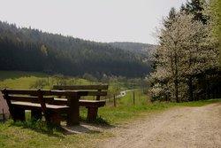Tolle Wanderwege in und um Heiligkreuzsteinach