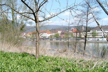 Ein Highlight in Eberbach: die Eberbacher Bärlauchtage mit vielen Leckereien rund um den Bärlauch!