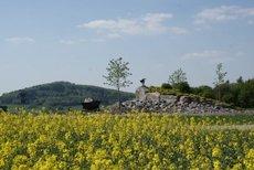 Feriendorf Waldbrunn-Waldkatzenbach: Auf dem Dach des Odenwaldes