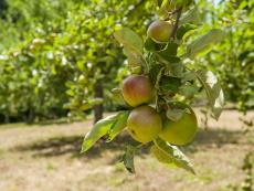 Apfellehrgarten Binau