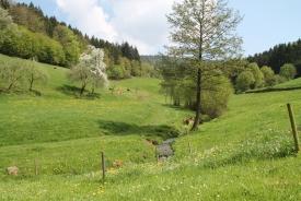 Waldbrunn-Oberdielbach