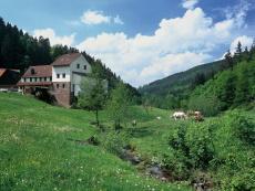 Waldbrunn